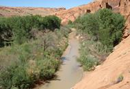 Above scene of Escalante River after removal of invasive species