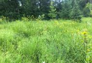 Meadow with native species