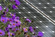 Solar field with native plants to promote pollinators