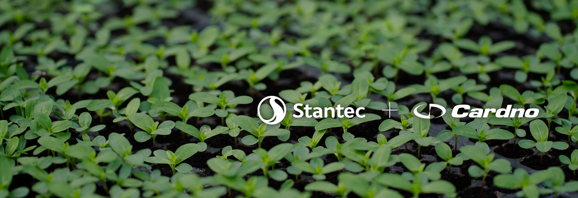 Stantec to acquire select Cardno businesses to grow Environmental Services and Infrastructure footprint